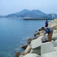 唐泊漁港、のっこみチヌダービー