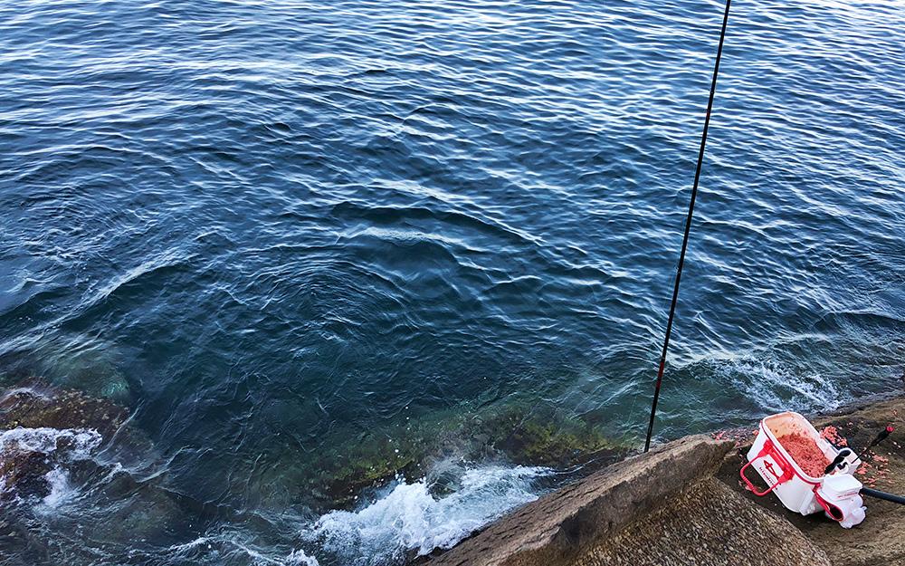 盆休みのイサキとクロ釣り(松島・馬渡島)