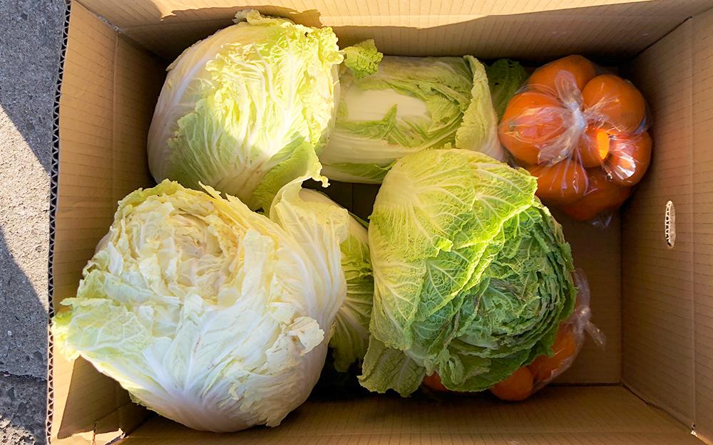 白菜とミカン