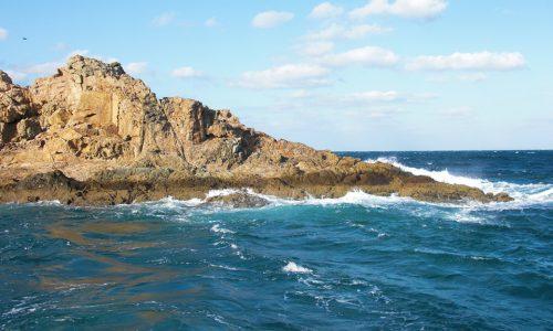 暴風の中で、野崎島(一ツ瀬)のオナガ