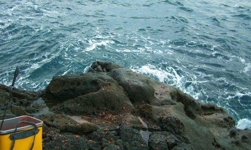 好釣果!10月の古志岐三礁(ロープ下)
