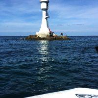 鷹島のオナガと男女群島のオナガ