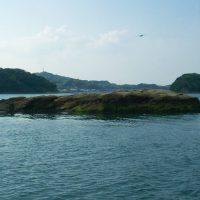 まだ早かった?福島のノッコミ黒鯛