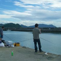 アジのサビキ釣り(西浦漁港)