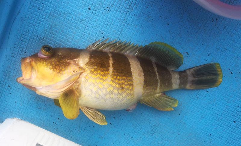 人気のタイラバ釣りは、レバーブレーキがおすすめ!
